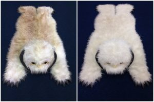 Clean fresh rugs white bear - specialist rug cleaning East Midlands