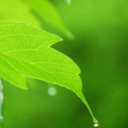 A&G Chem-Dry Clean & Green