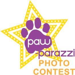 Paw-Parazzi Pet Photo Contest November - A&G Chem-Dry