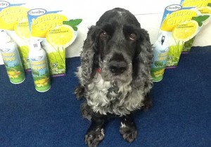 Max from A&G Chem-Dry - how to keep your carpet fresh!